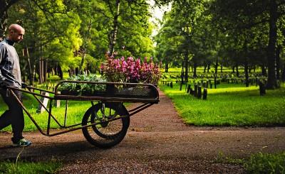 Skogskyrkogårdemn